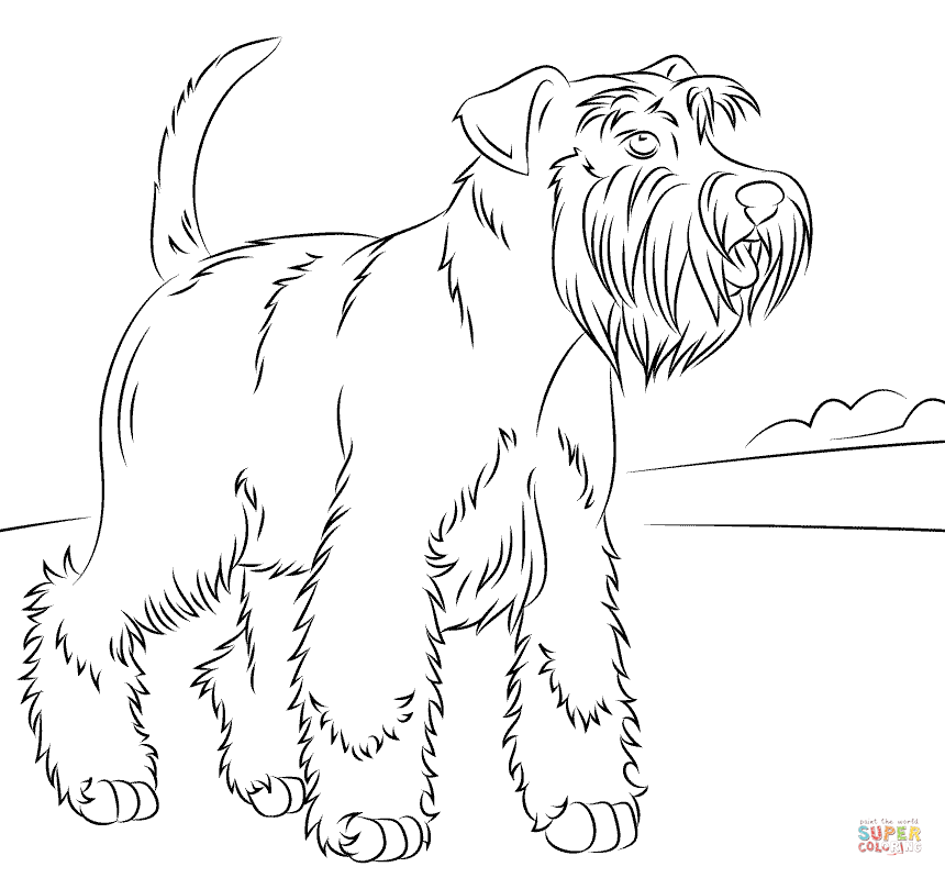 schnauzer coloring pages schnauzer line drawing at getdrawings free download pages coloring schnauzer