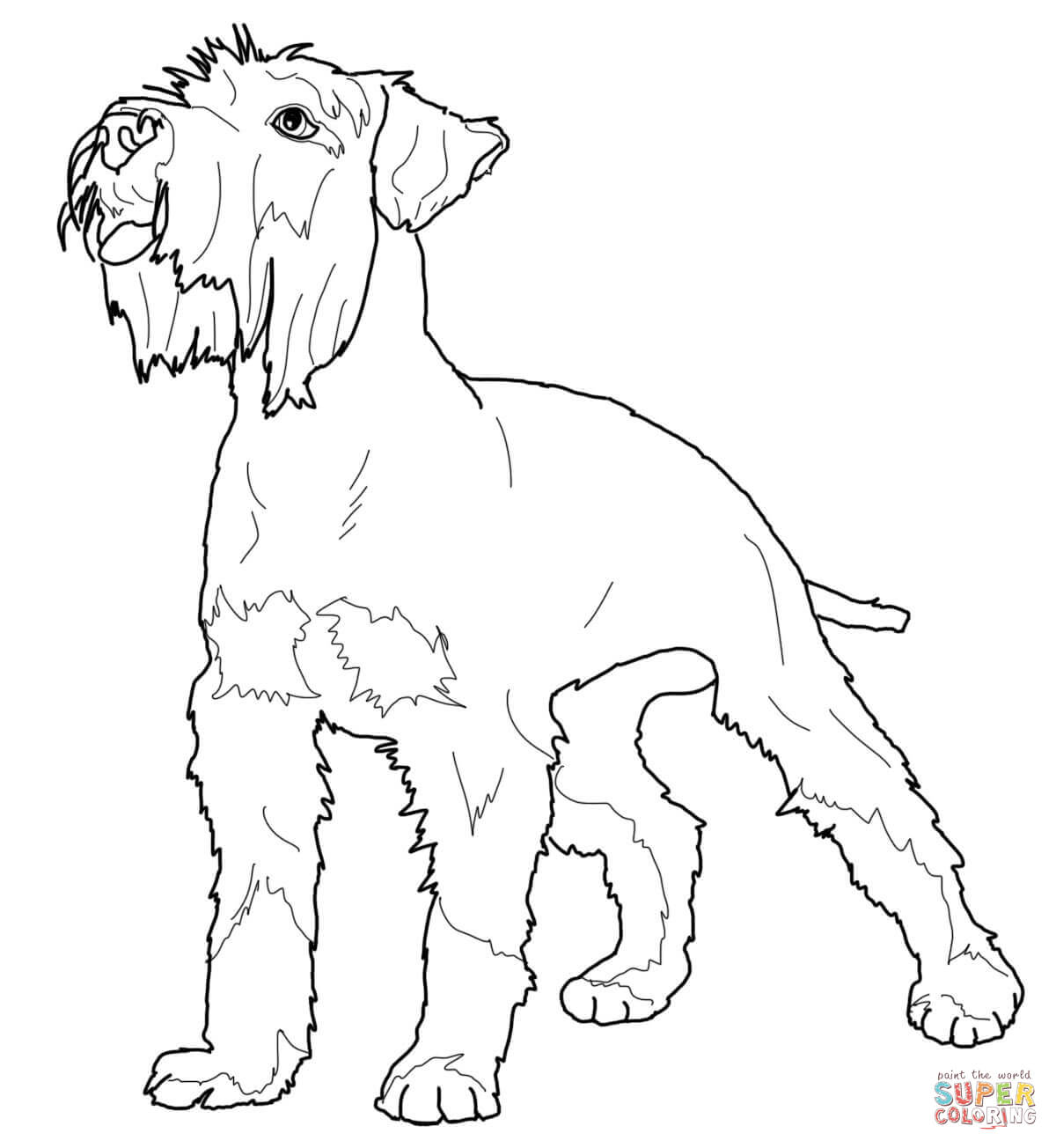 schnauzer coloring pages worksheets educationcom schnauzer pages coloring