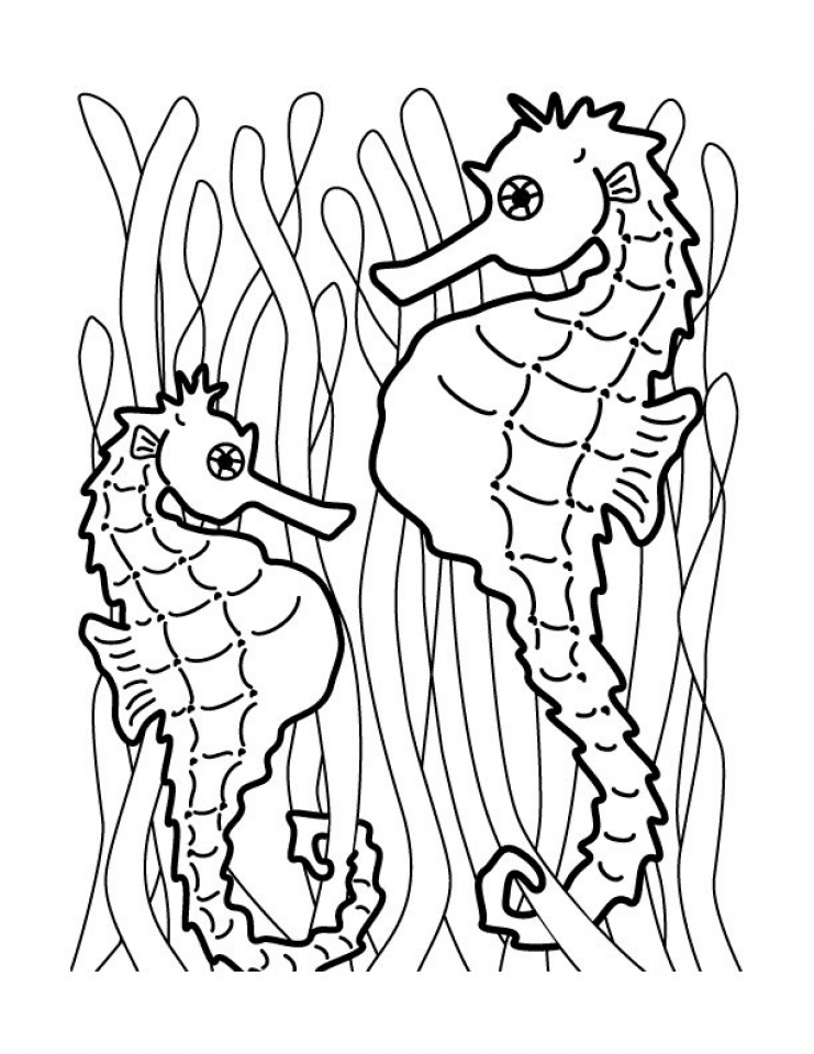 seahorse coloring pages to print free printable seahorse coloring pages for kids coloring pages seahorse print to
