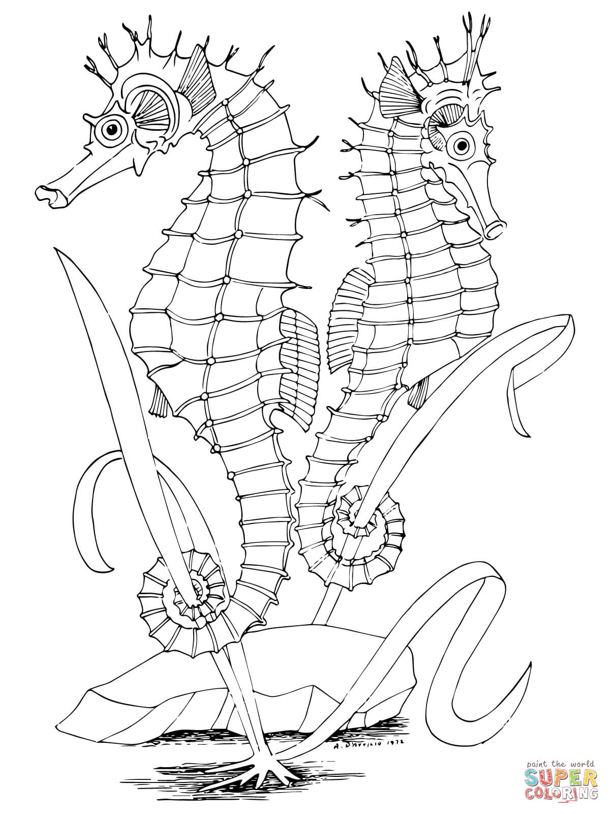 seahorse coloring pages to print printable seahorse coloring pages for kids cool2bkids seahorse coloring pages print to