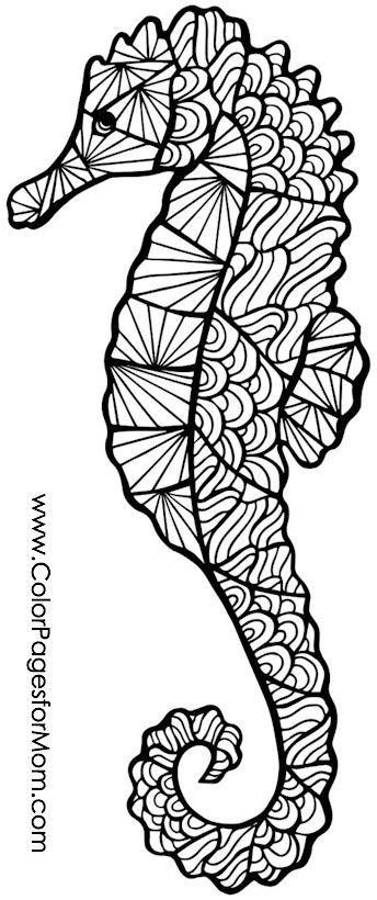 seahorse coloring pages to print seahorse coloring pages print coloring pages seahorse to