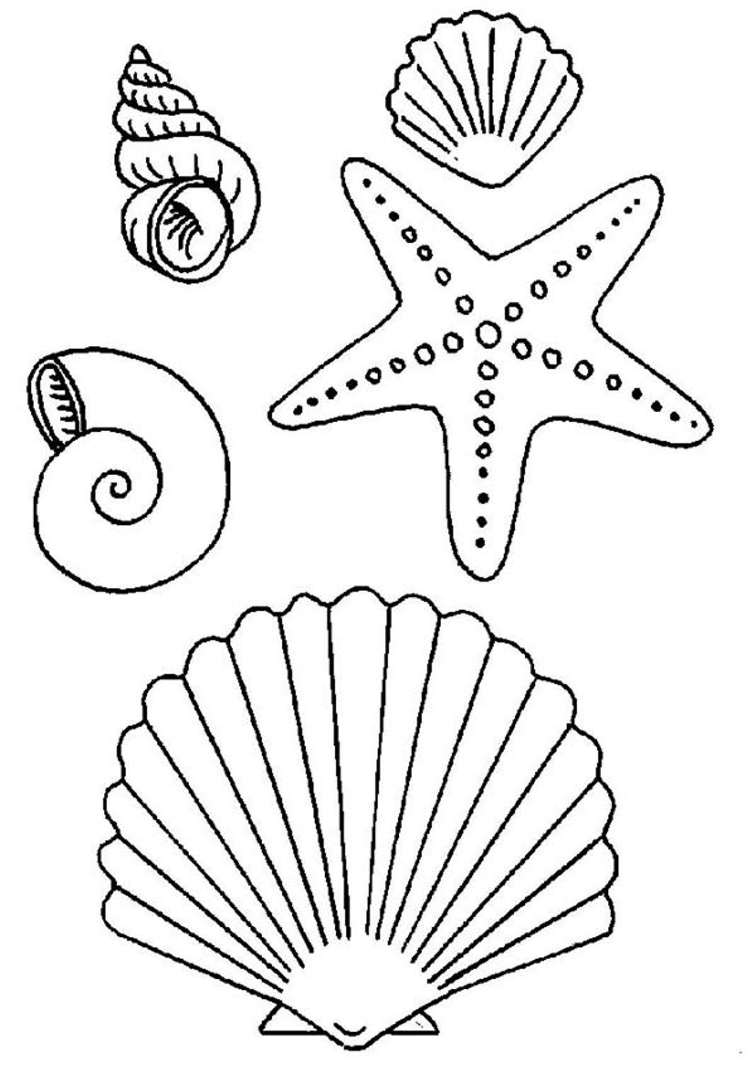 seashell coloring coloring pages of seashells coloring home seashell coloring