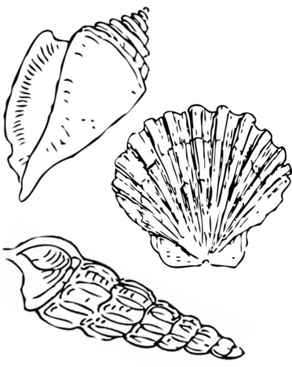 seashell coloring free printable seashell coloring pages for kids patricia coloring seashell