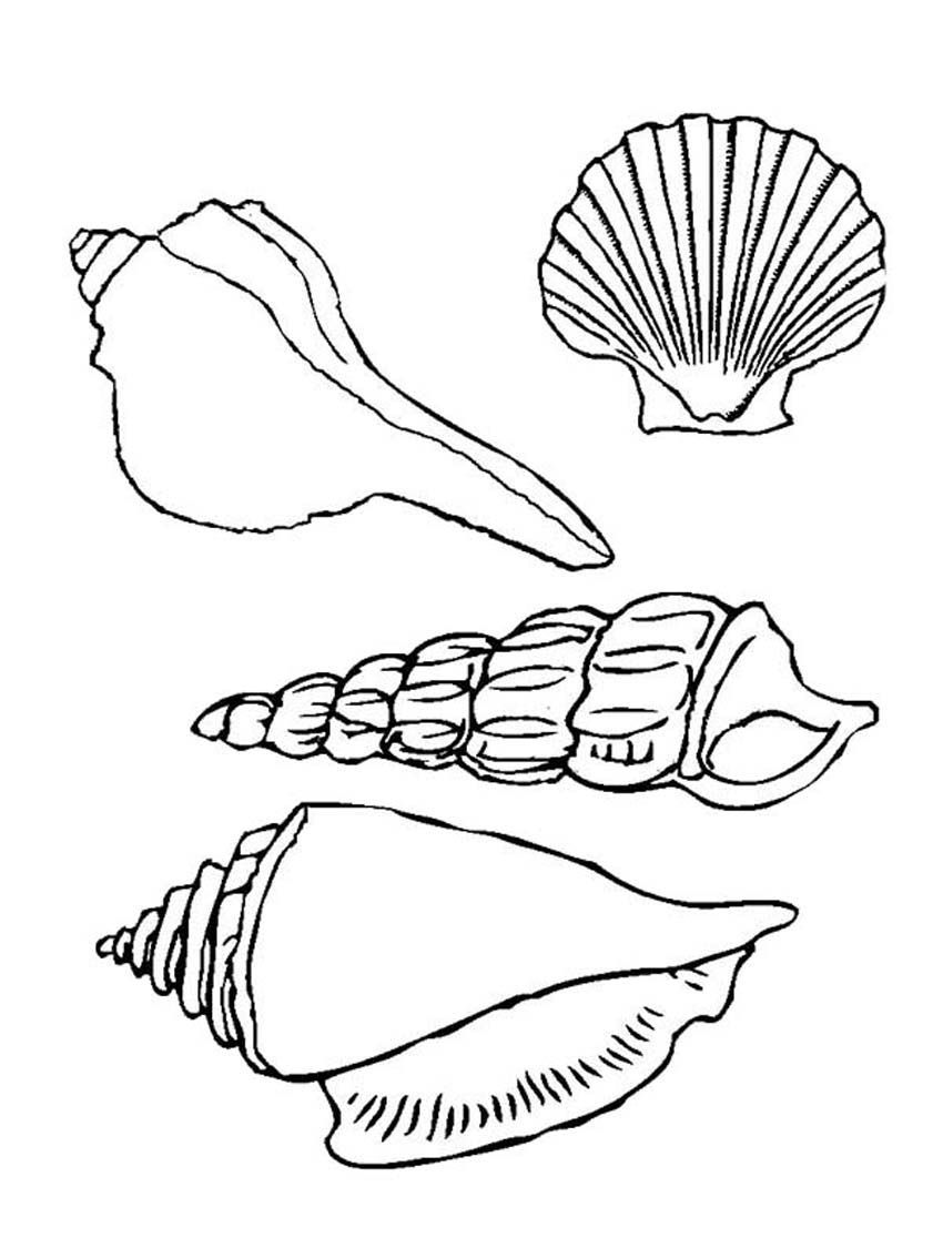 seashell coloring seashell coloring pages printable coloring home coloring seashell