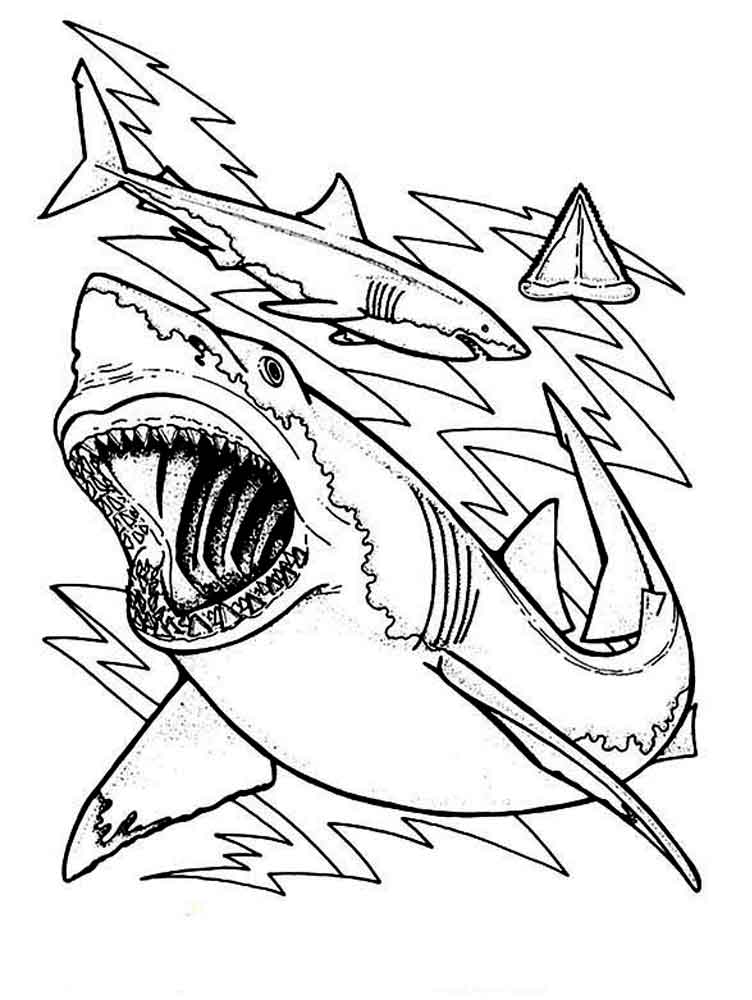shark picture to color marine animal coloring pages picture shark color to