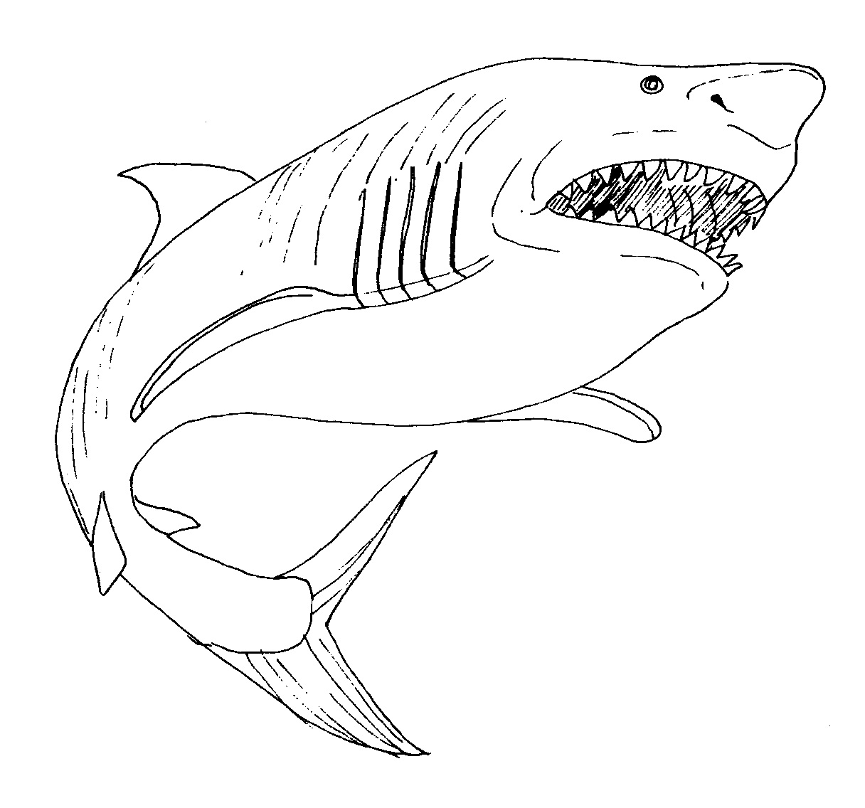 sharks to color 33 free shark coloring pages printable to sharks color
