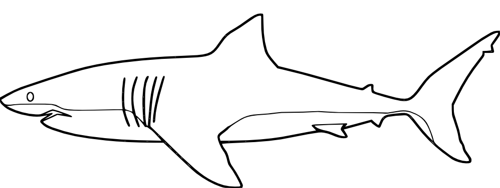 sharks to color download whale shark coloring for free designlooter 2020 sharks color to