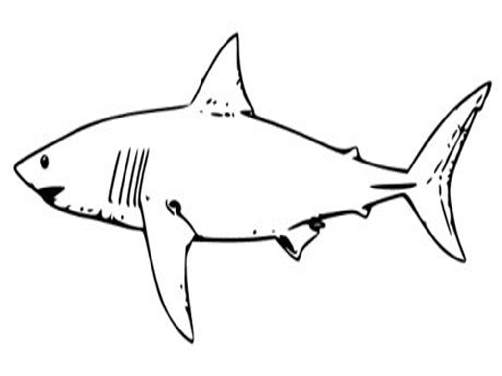 sharks to color great white shark coloring pages to download and print for sharks color to