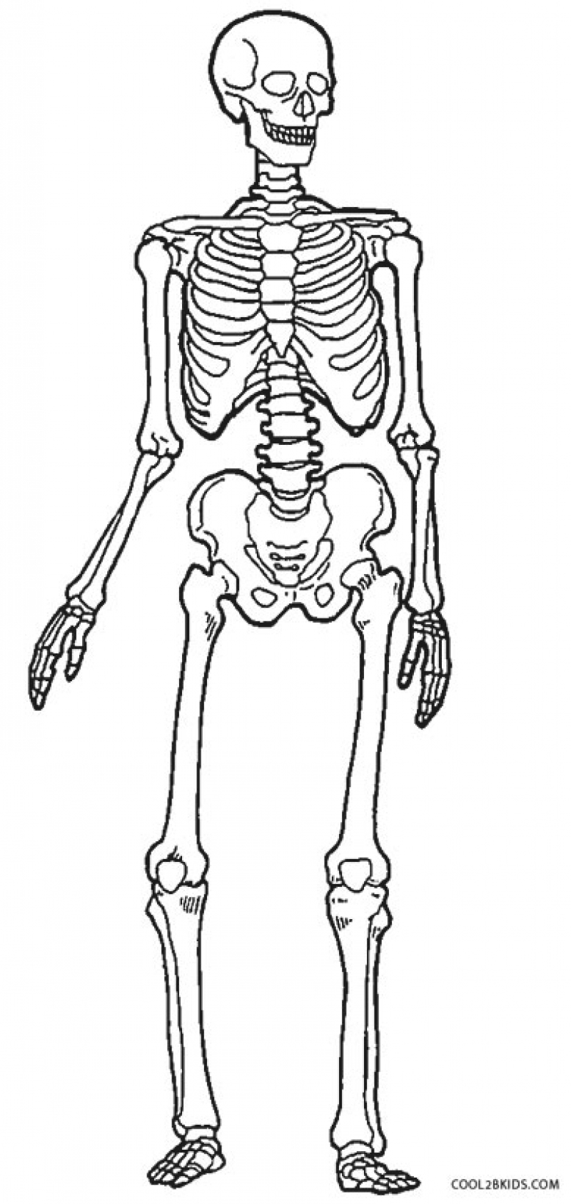 skeleton coloring pages free printable skeleton coloring pages for kids coloring pages skeleton 1 1