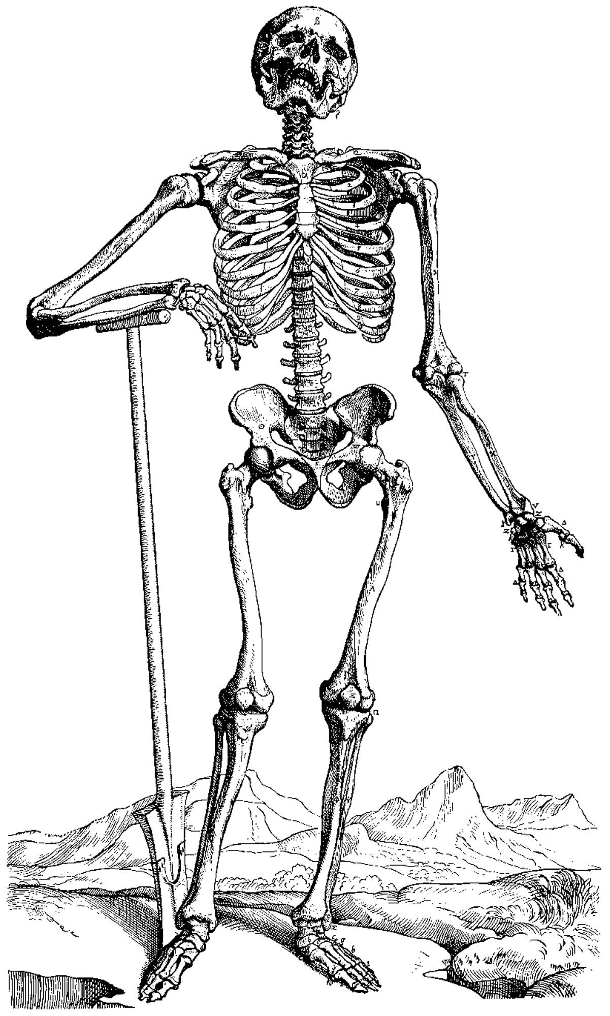 skeleton coloring pages free printable skeleton coloring pages skeleton coloring pages skeleton coloring