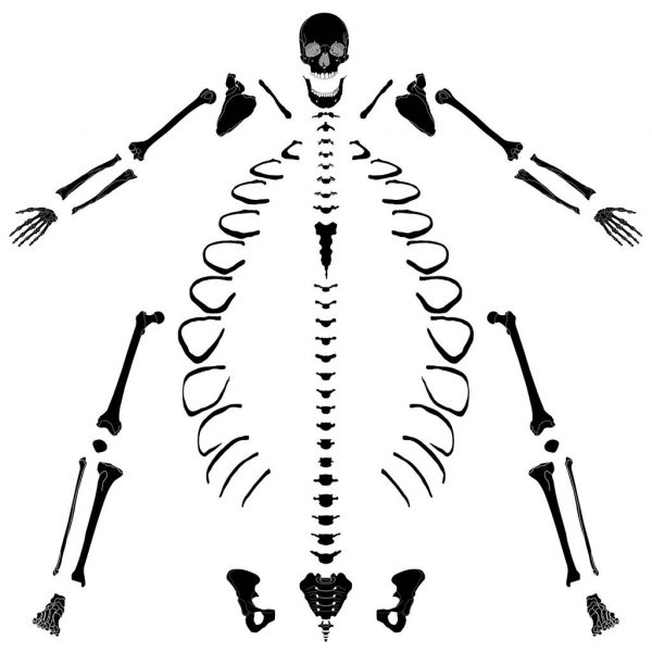 skeleton silhouette dancing skeleton silhouette stock vector clairev 2200956 silhouette skeleton