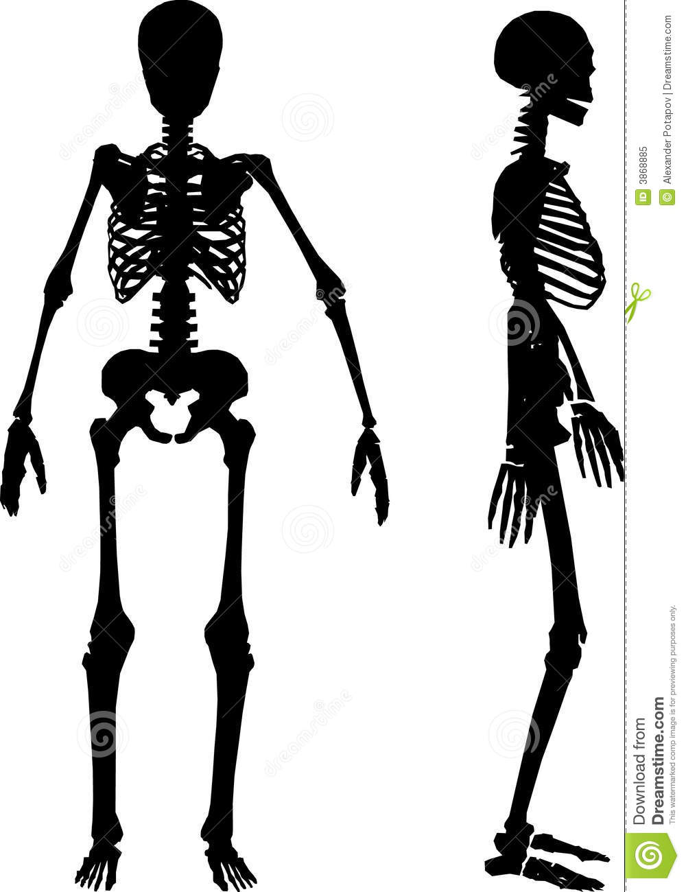 skeleton silhouette silhouettes of human skeleton stock vector illustration silhouette skeleton