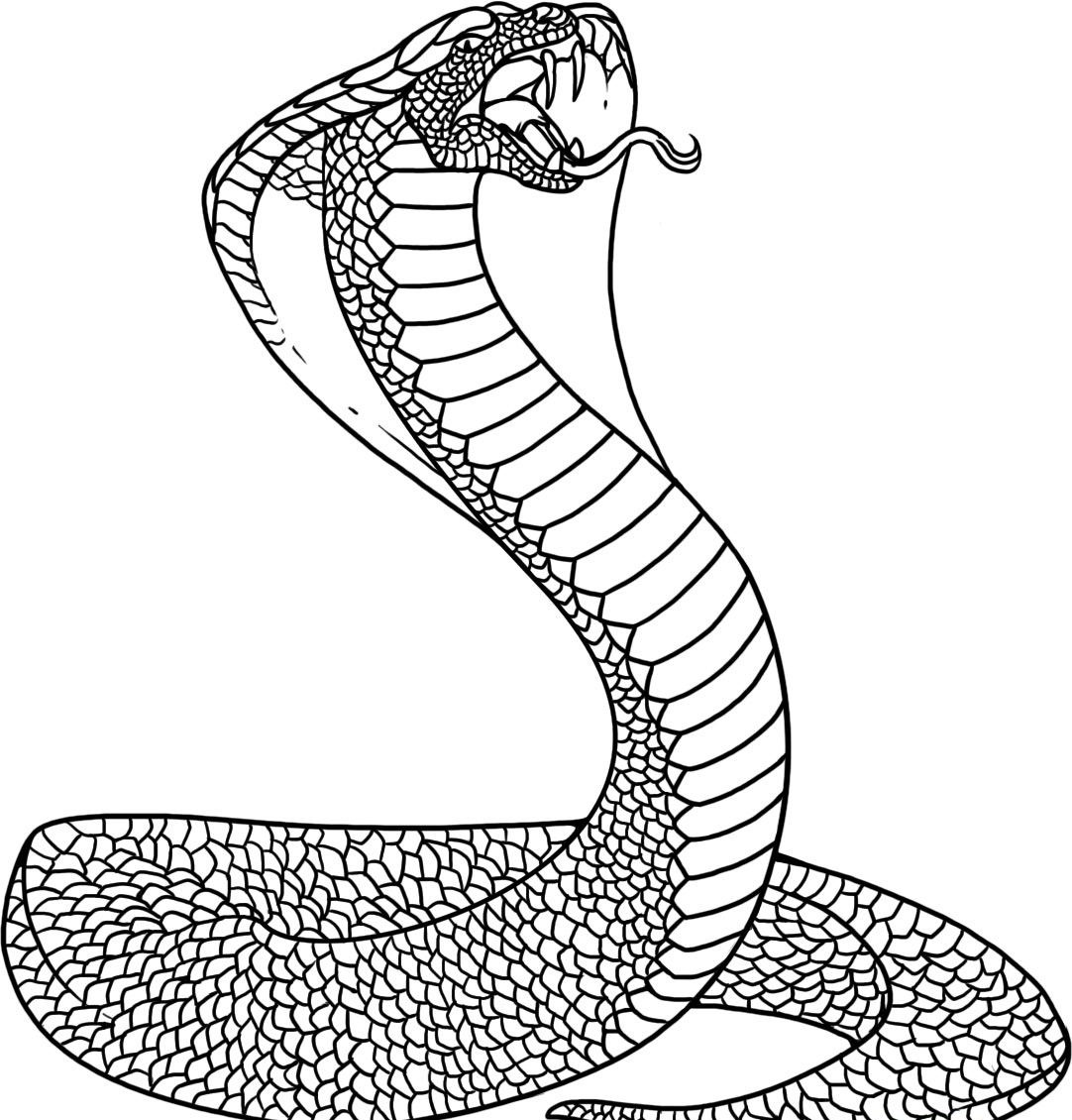 snake pictures for coloring get this snake coloring pages free printable 76955 coloring pictures snake for