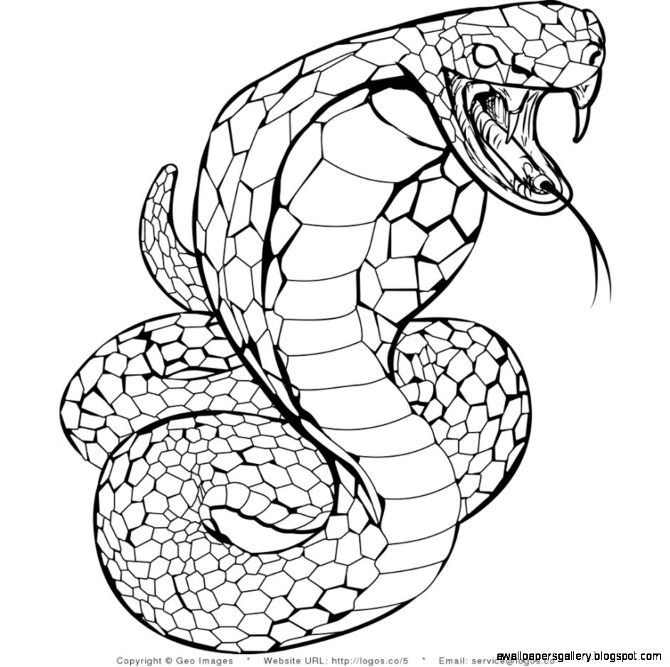 snake pictures for coloring snake printable coloring pages coloring home pictures snake coloring for