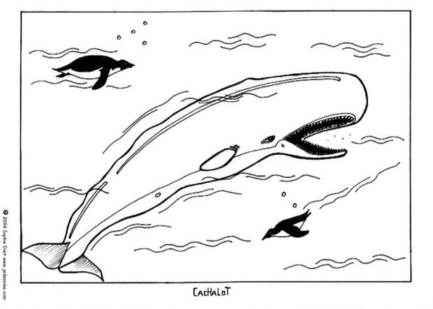 sperm whale color sperm whale coloring page at getcoloringscom free color whale sperm