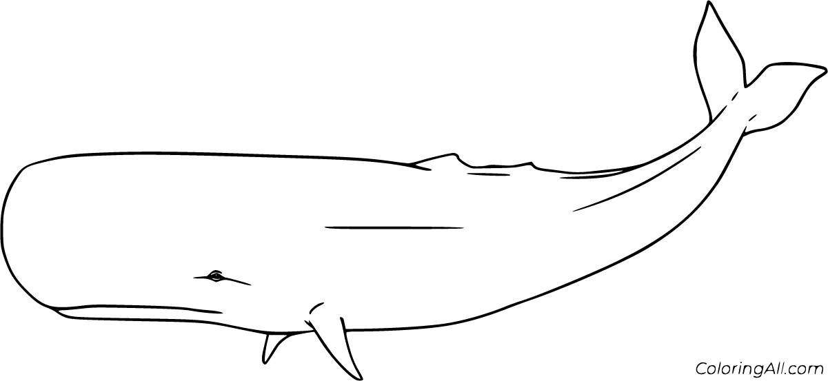 sperm whale color sperm whale line drawing at getdrawings free download whale color sperm