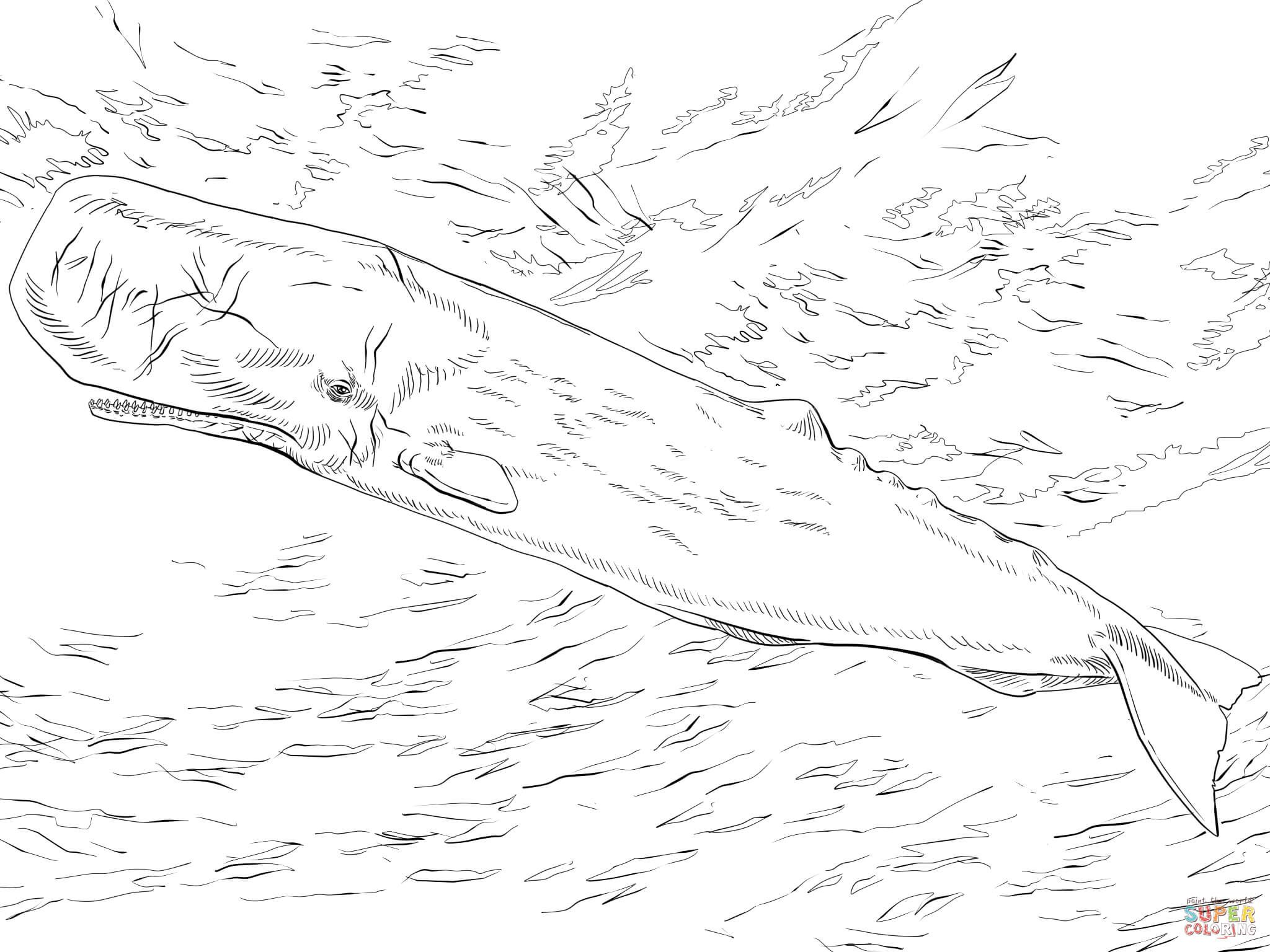 sperm whale color the snail on the whale free colouring pages whale sperm color