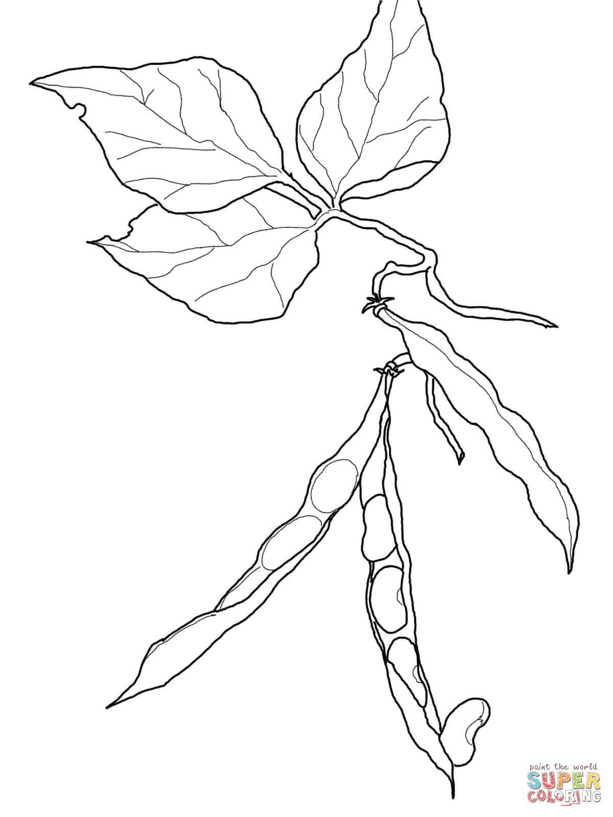 sprout coloring pages seed sprout coloring pages sprout coloring pages