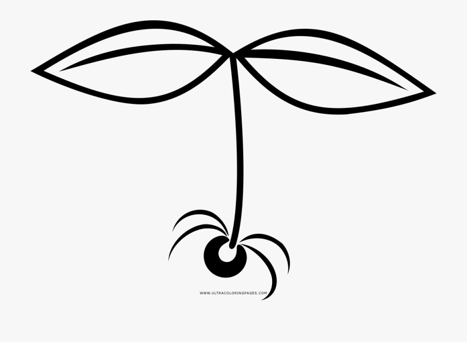 sprout coloring pages sprout coloring page transparent cartoon free cliparts pages coloring sprout