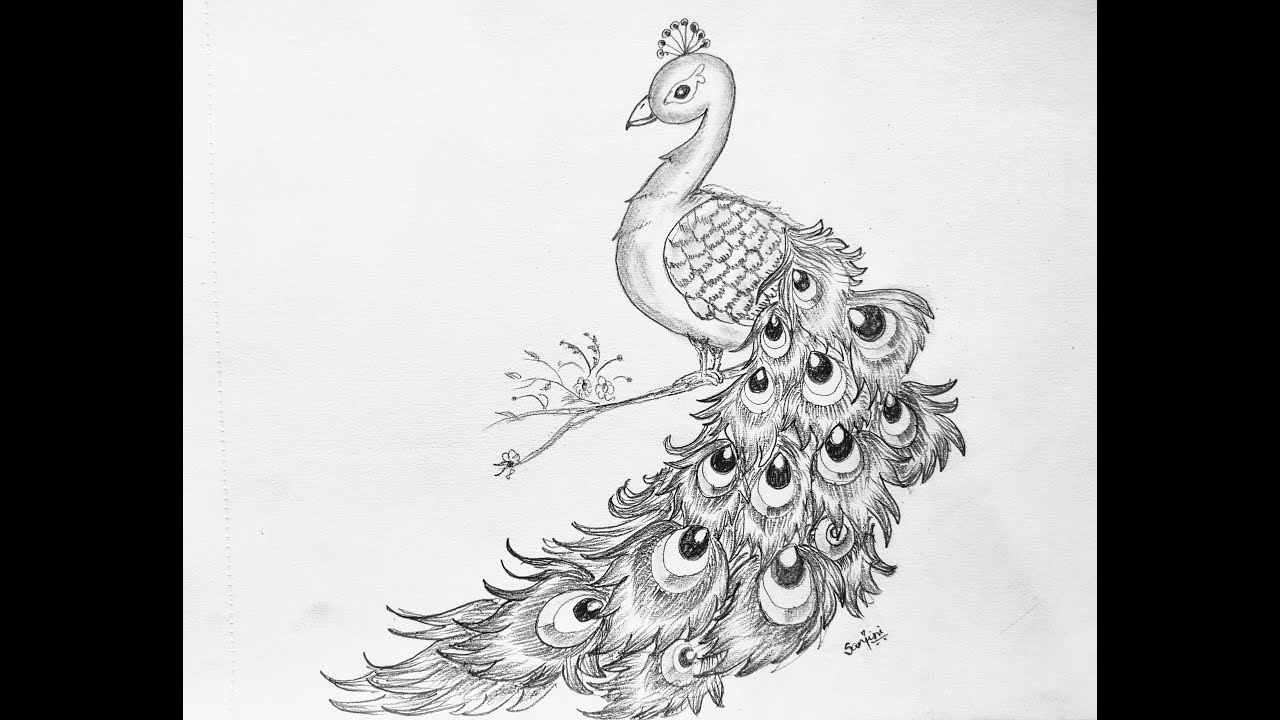 step by step drawing peacock peacock drawing step by step for beginners how to draw a peacock step step by drawing