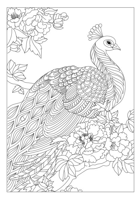 step by step drawing peacock step by step coloring sitting pretty peacock drawing peacock drawing step by step