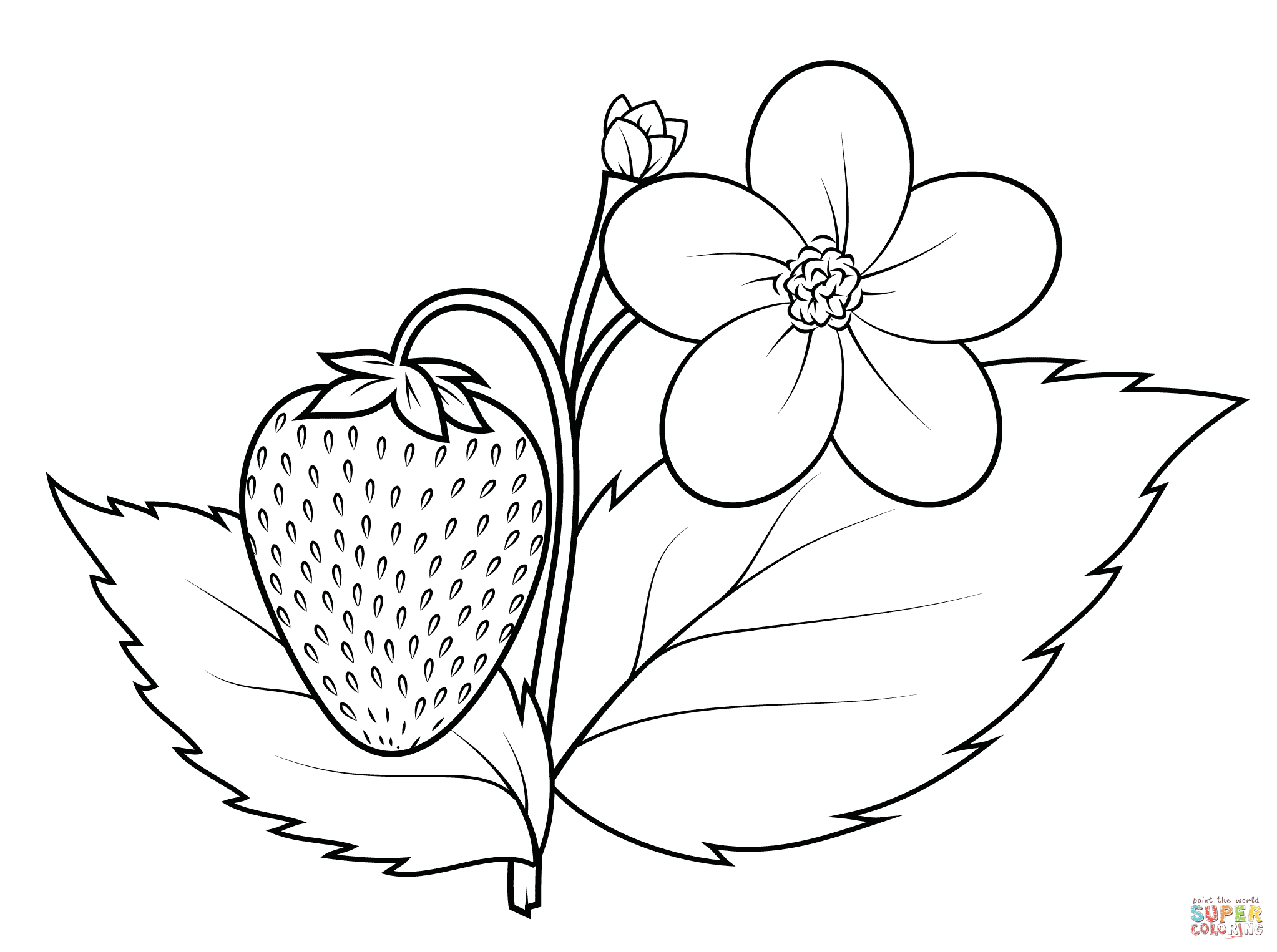 strawberry coloring page free printable fruit coloring pages for kids coloring strawberry page