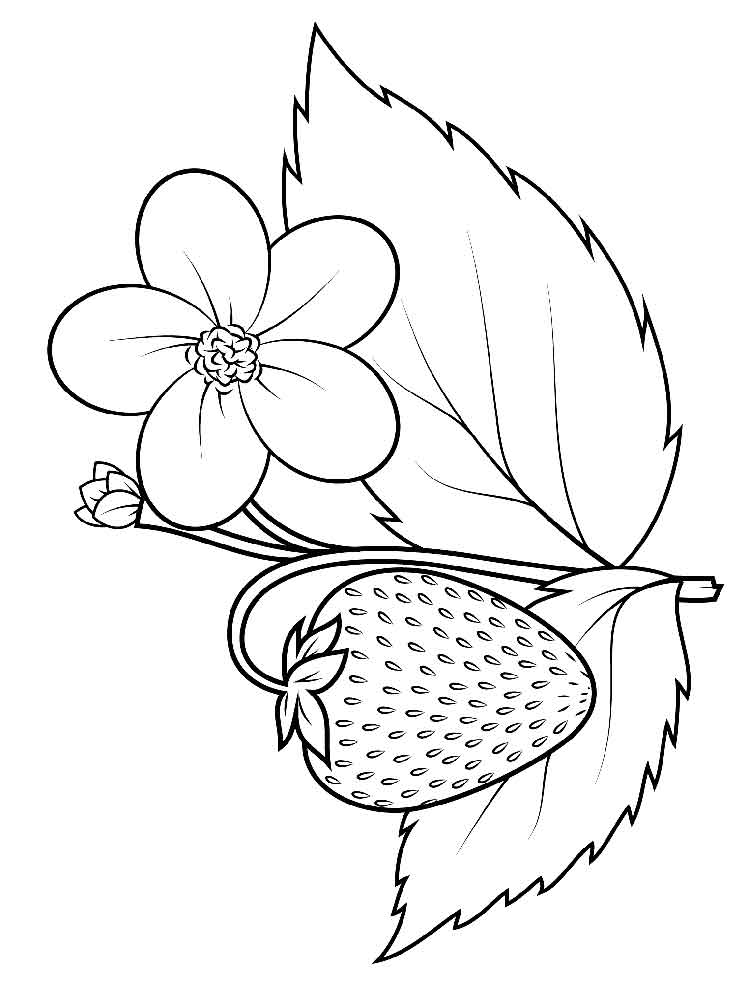 strawberry coloring page one large strawberry coloring page printable page strawberry coloring