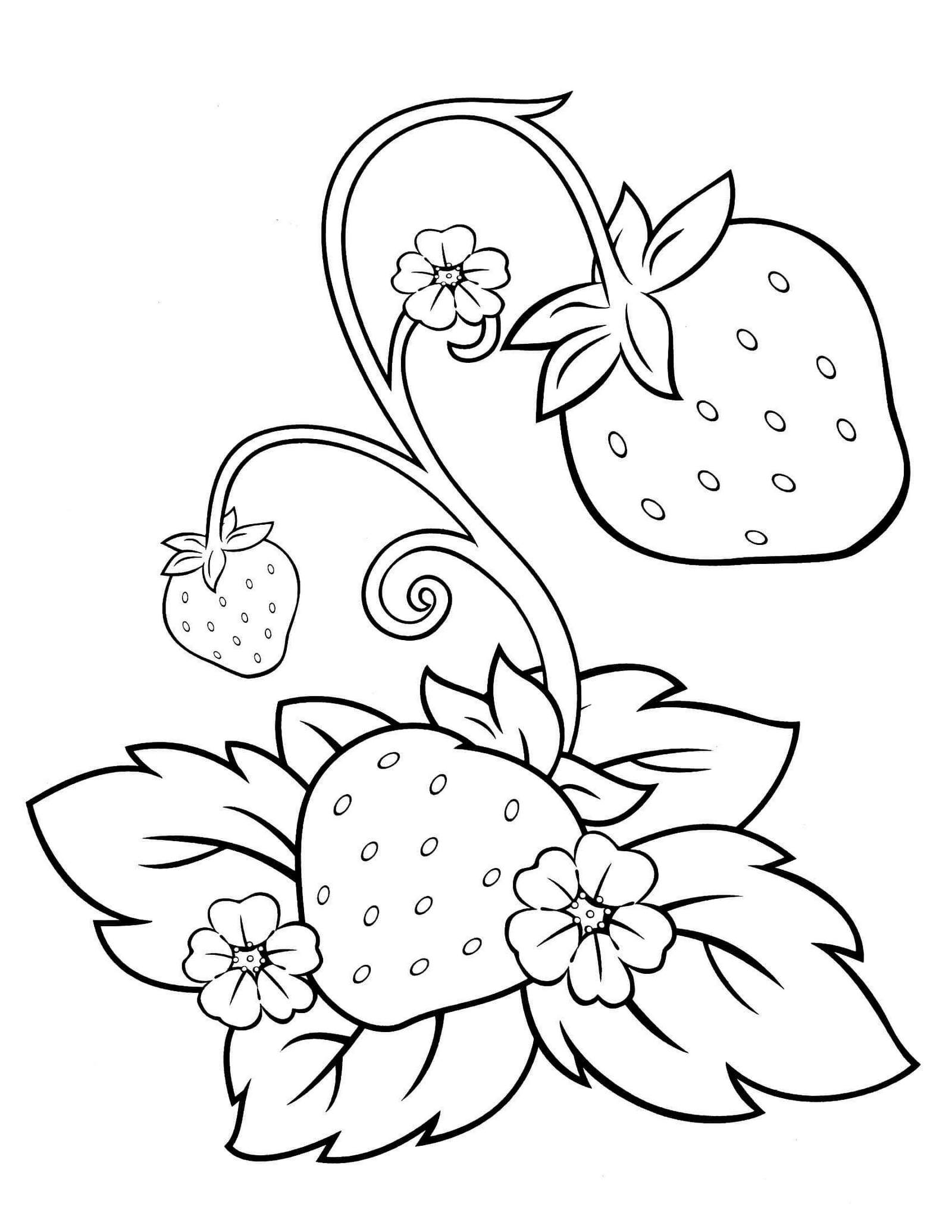 strawberry coloring page strawberries coloring pages coloring pages to download page coloring strawberry