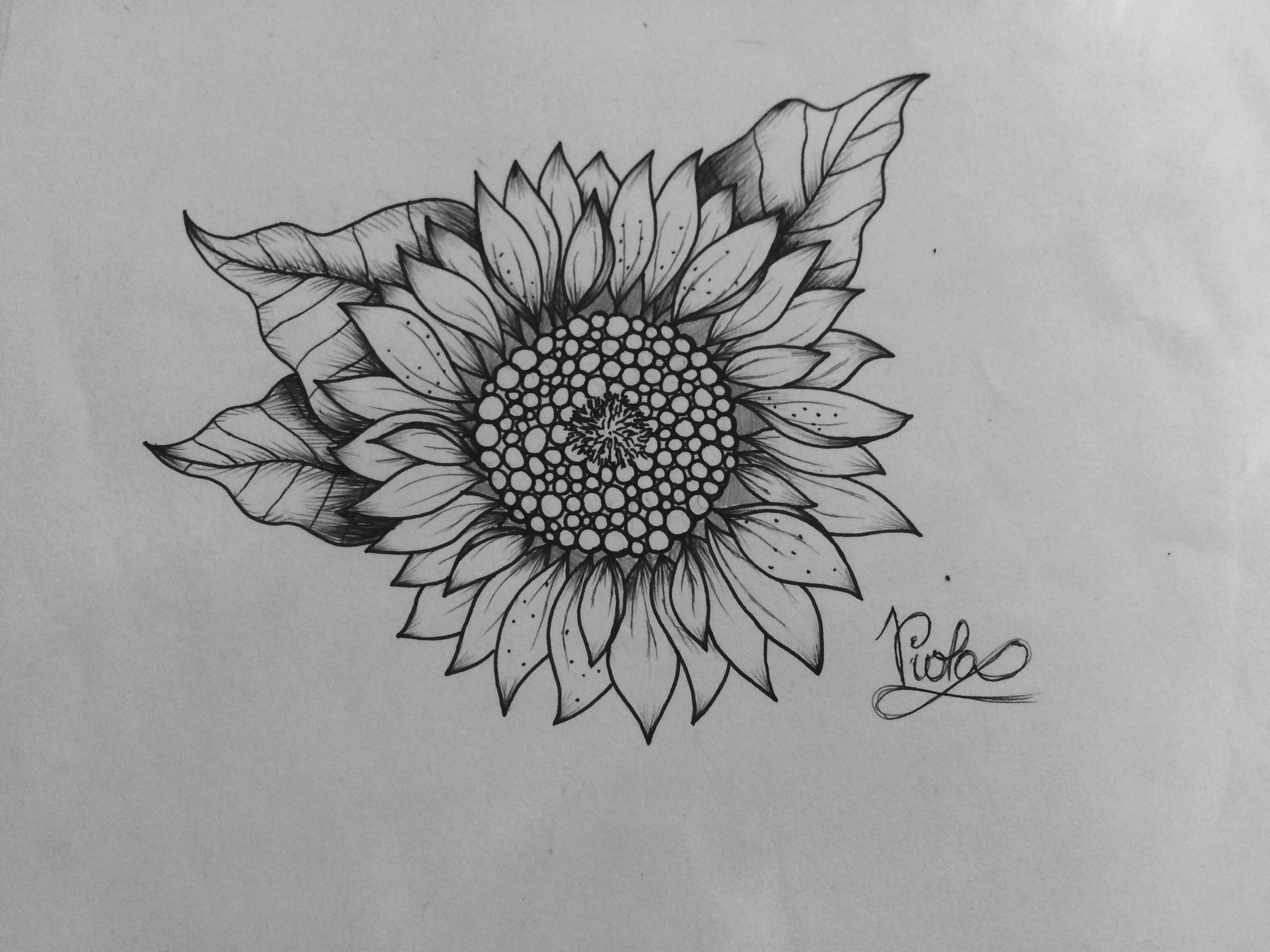 sun flower drawing best sunflower drawings images free vector art images flower sun drawing