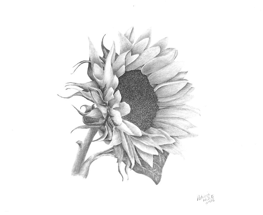 sun flower drawing sun flower clipart black and white free download on flower sun drawing
