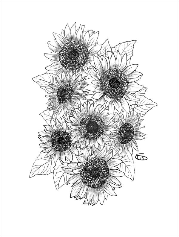 sun flower drawing sunflower drawing black and white at paintingvalleycom sun flower drawing