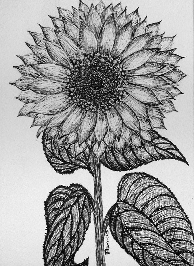 sun flower drawing sunflower paintings search result at paintingvalleycom flower sun drawing