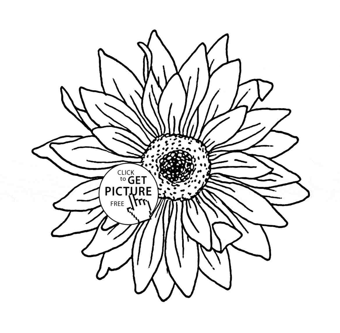 sunflower outline picture drawn sunflower outline sunflower flower drawing 4 outline picture sunflower