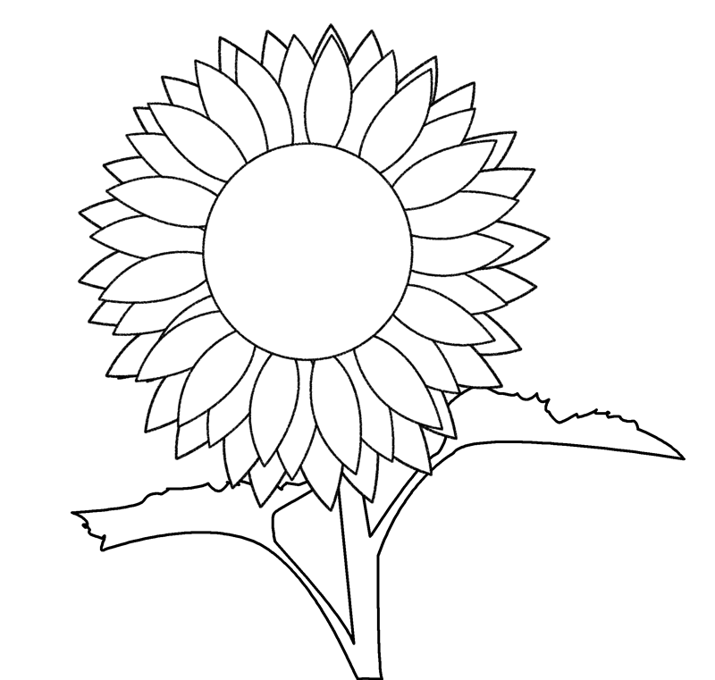 sunflower outline picture printable sunflower coloring page clip art library sunflower outline picture