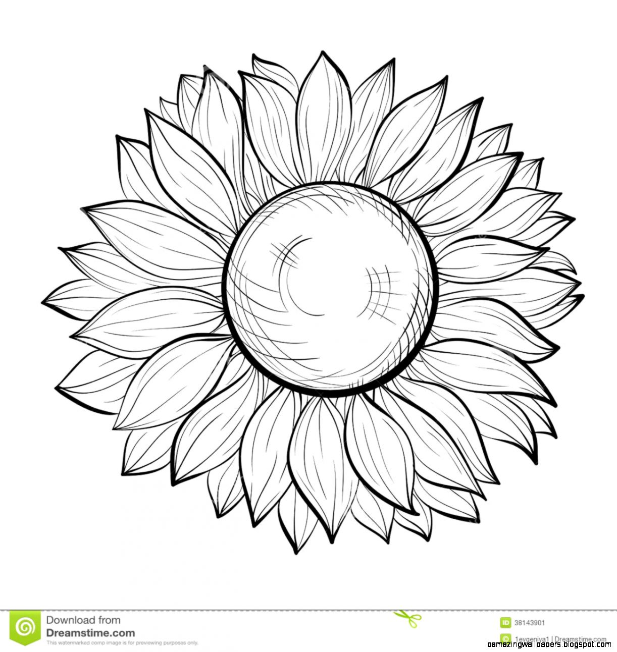 sunflower outline picture simple sunflower drawing free download on clipartmag outline picture sunflower