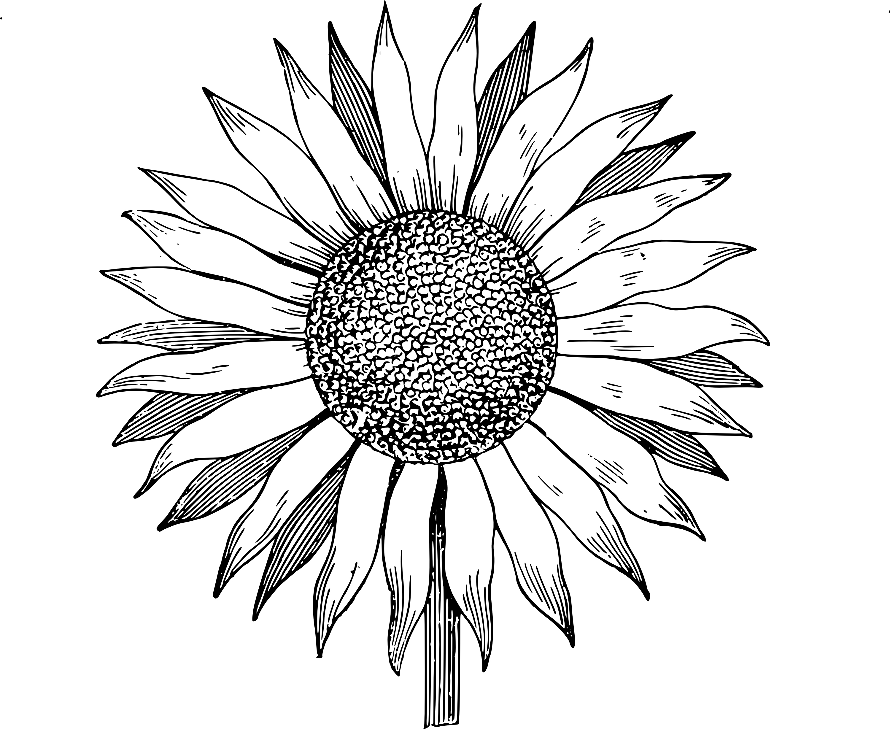 Sunflower outline picture