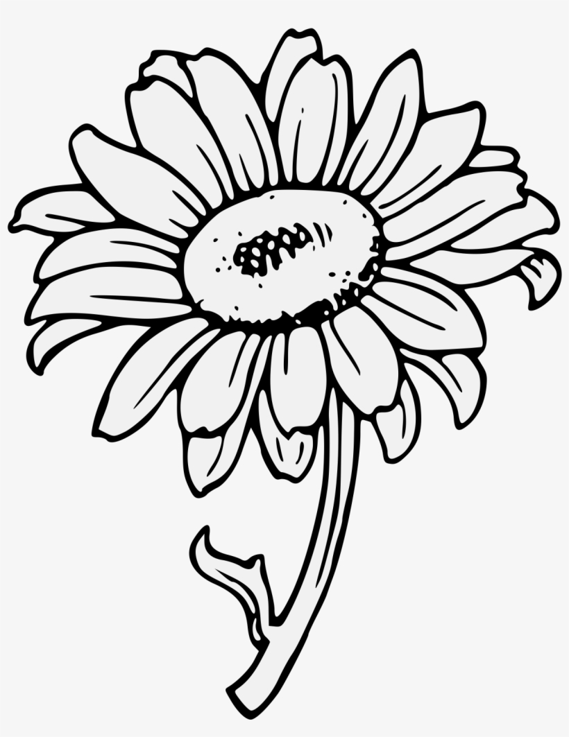 sunflower outline picture sunflower stamp tall colors for earth llc sunflower outline sunflower picture
