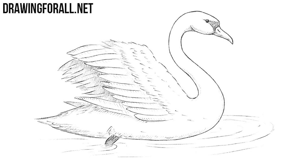 swan outline drawings how to draw a swan drawingforallnet outline swan drawings