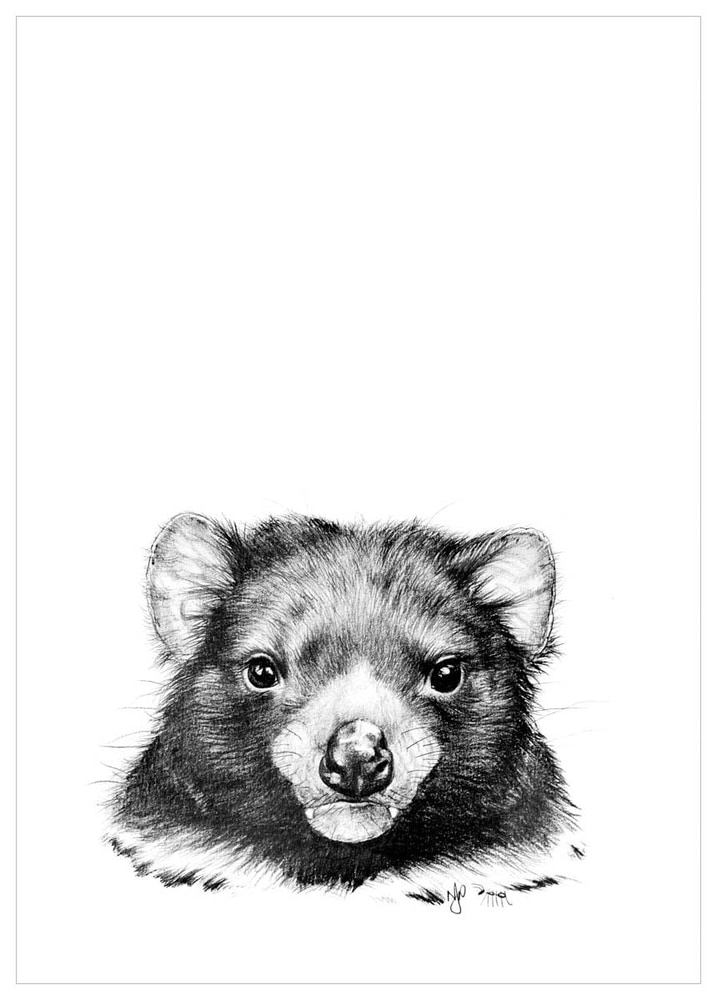 tasmanian devil drawing furred pencil collection drawings of tasmanian devil tasmanian devil drawing