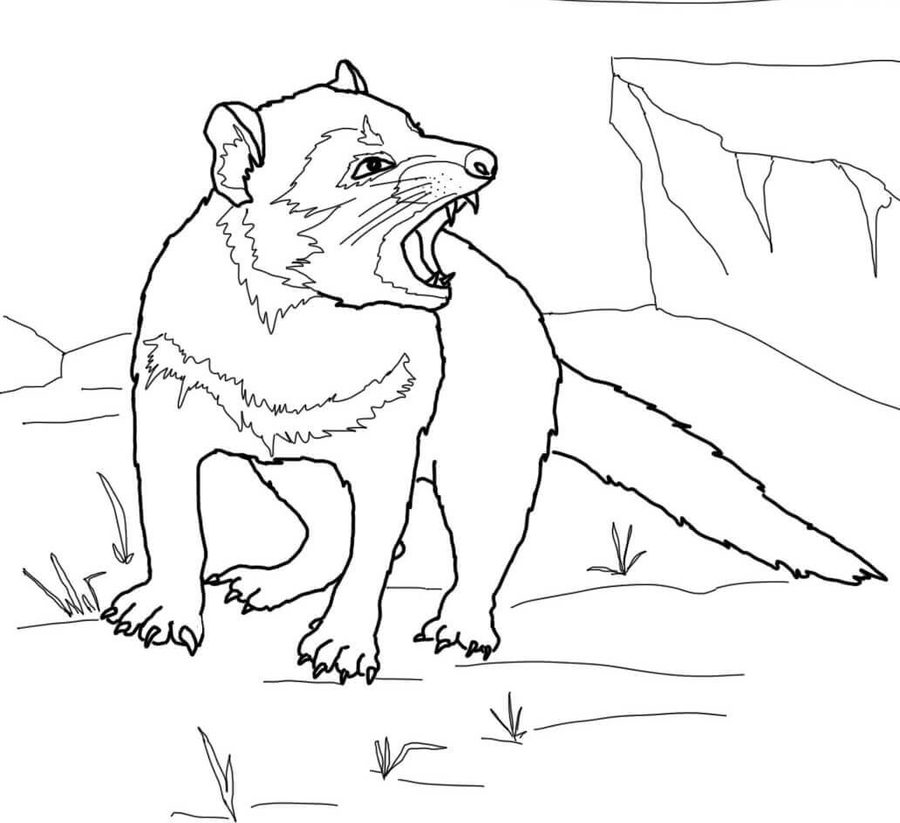 tasmanian devil drawing i should be drawing now fun fact tasmanian devil devil tasmanian drawing