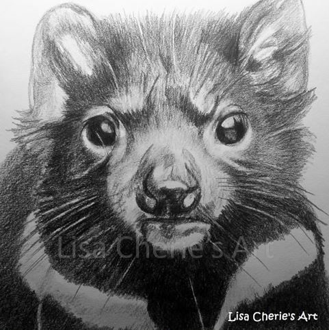 tasmanian devil drawing pin on art by lisa cherie devil drawing tasmanian