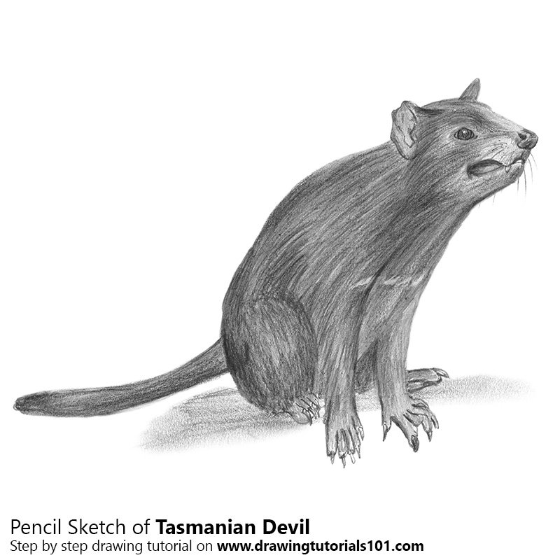 tasmanian devil drawing step by step how to draw tasmanian devil from looney tunes devil drawing tasmanian