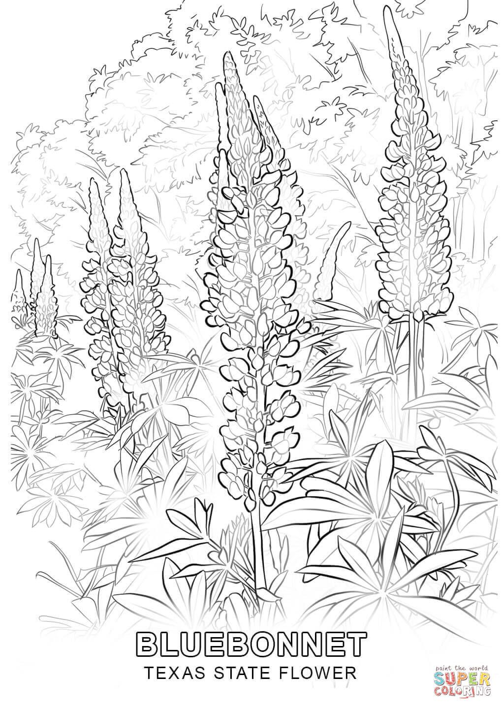 texas coloring pages texas state flag coloring page sketch coloring page pages coloring texas