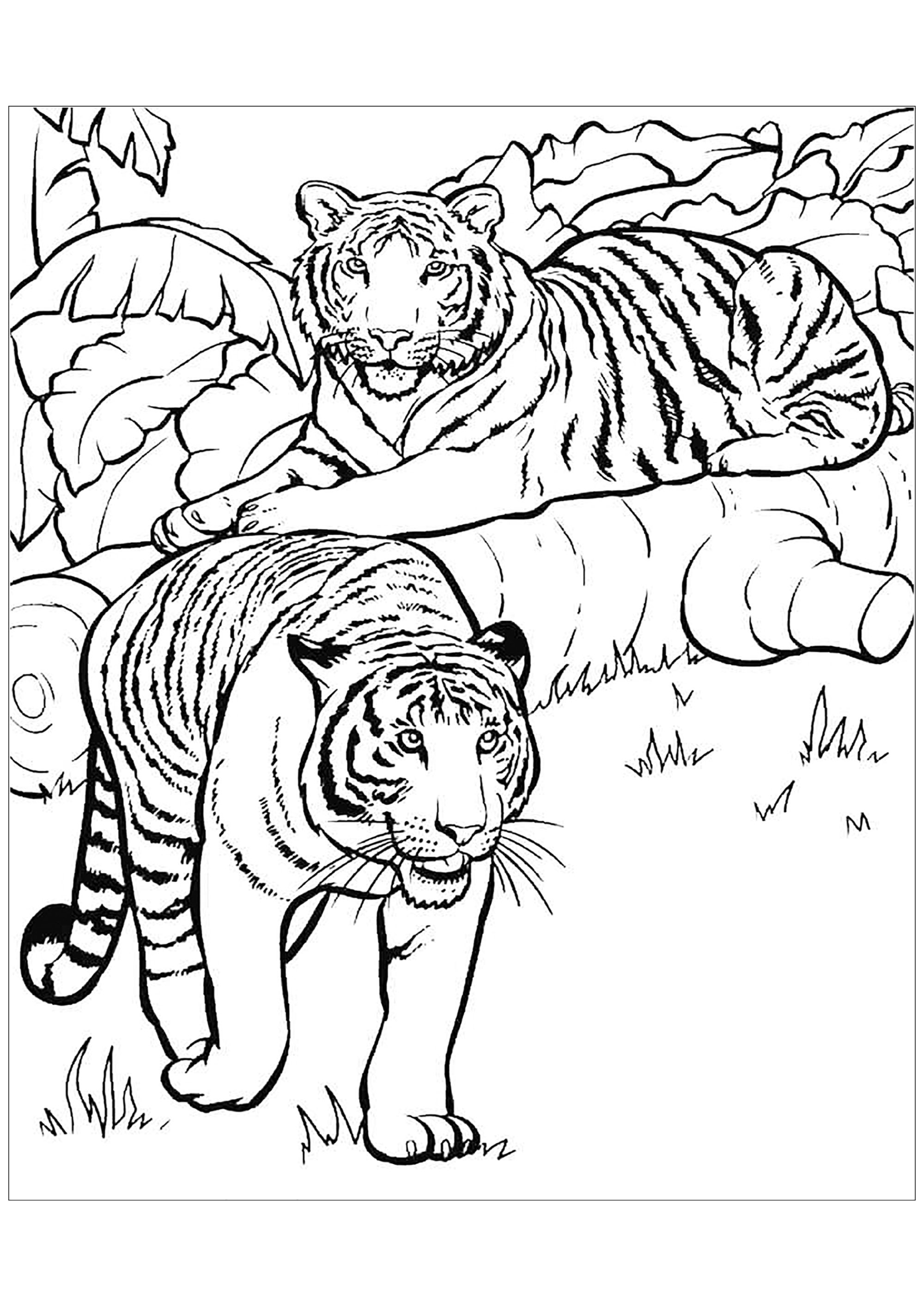 tiger images for colouring free printable tiger coloring pages for kids for colouring images tiger