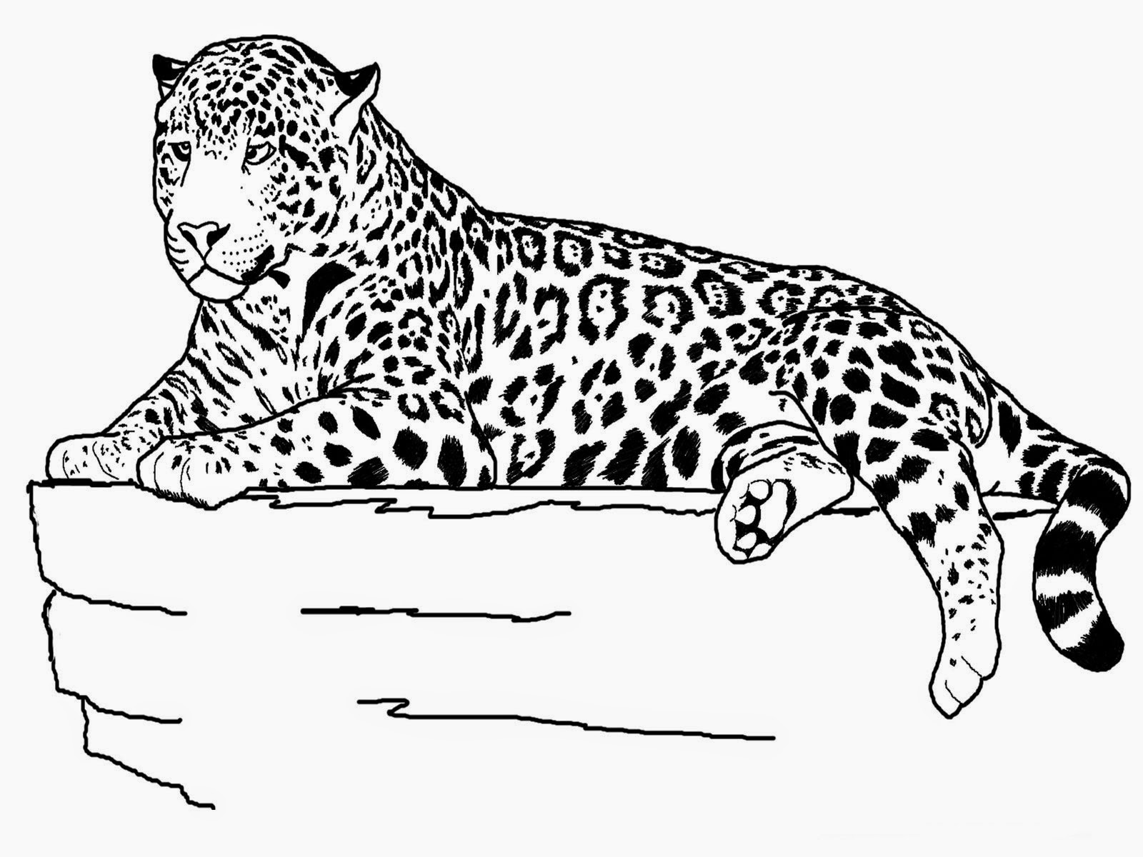 tiger images for colouring free printable tiger coloring pages for kids for colouring images tiger 1 1
