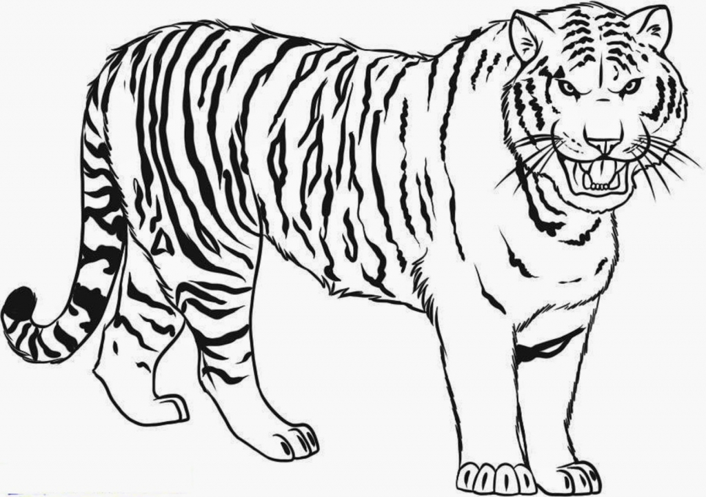 tiger images for colouring outline of a tiger coloring home for images colouring tiger