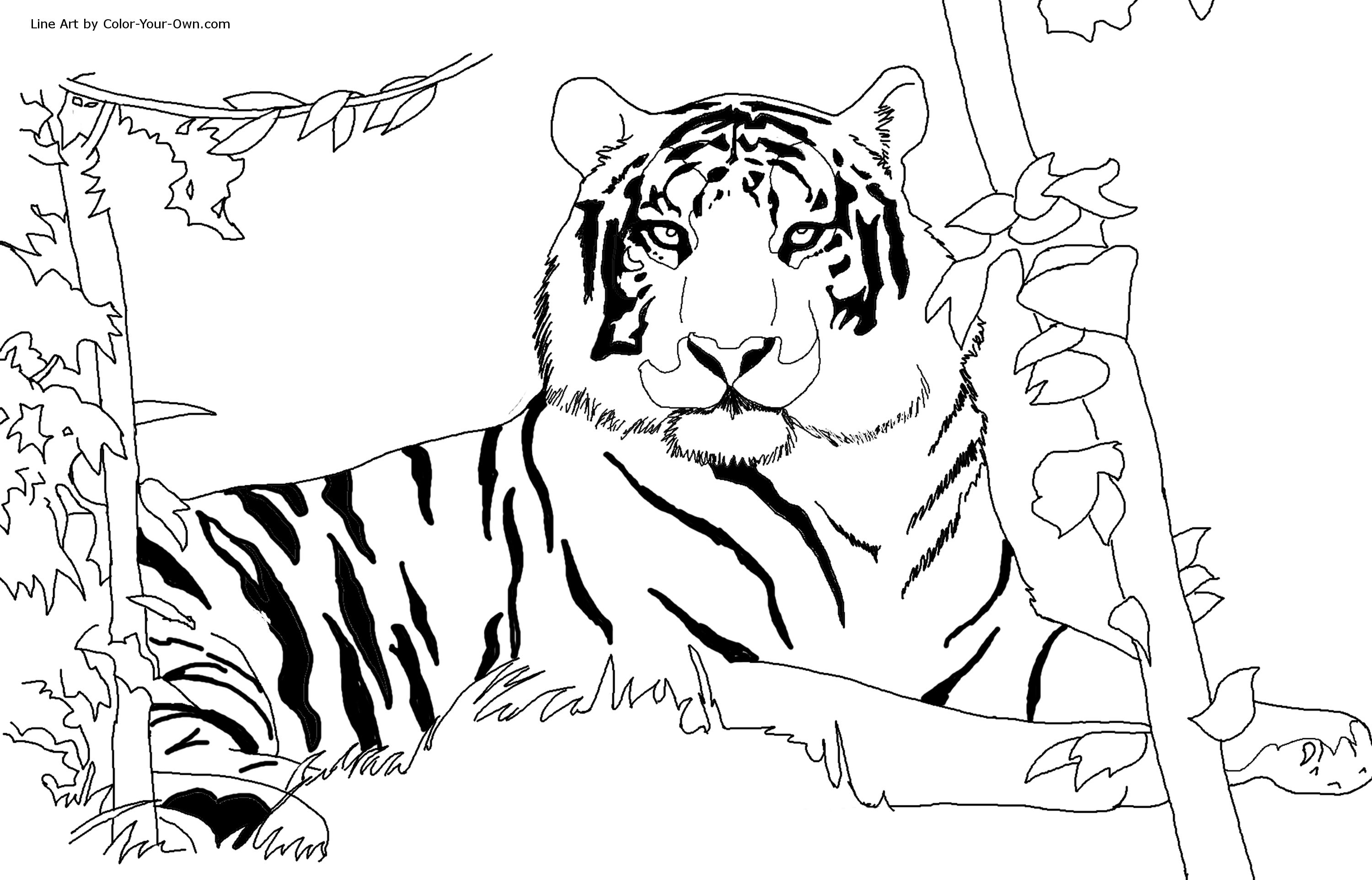 tiger images for colouring tiger coloring pages at getdrawings free download colouring for tiger images