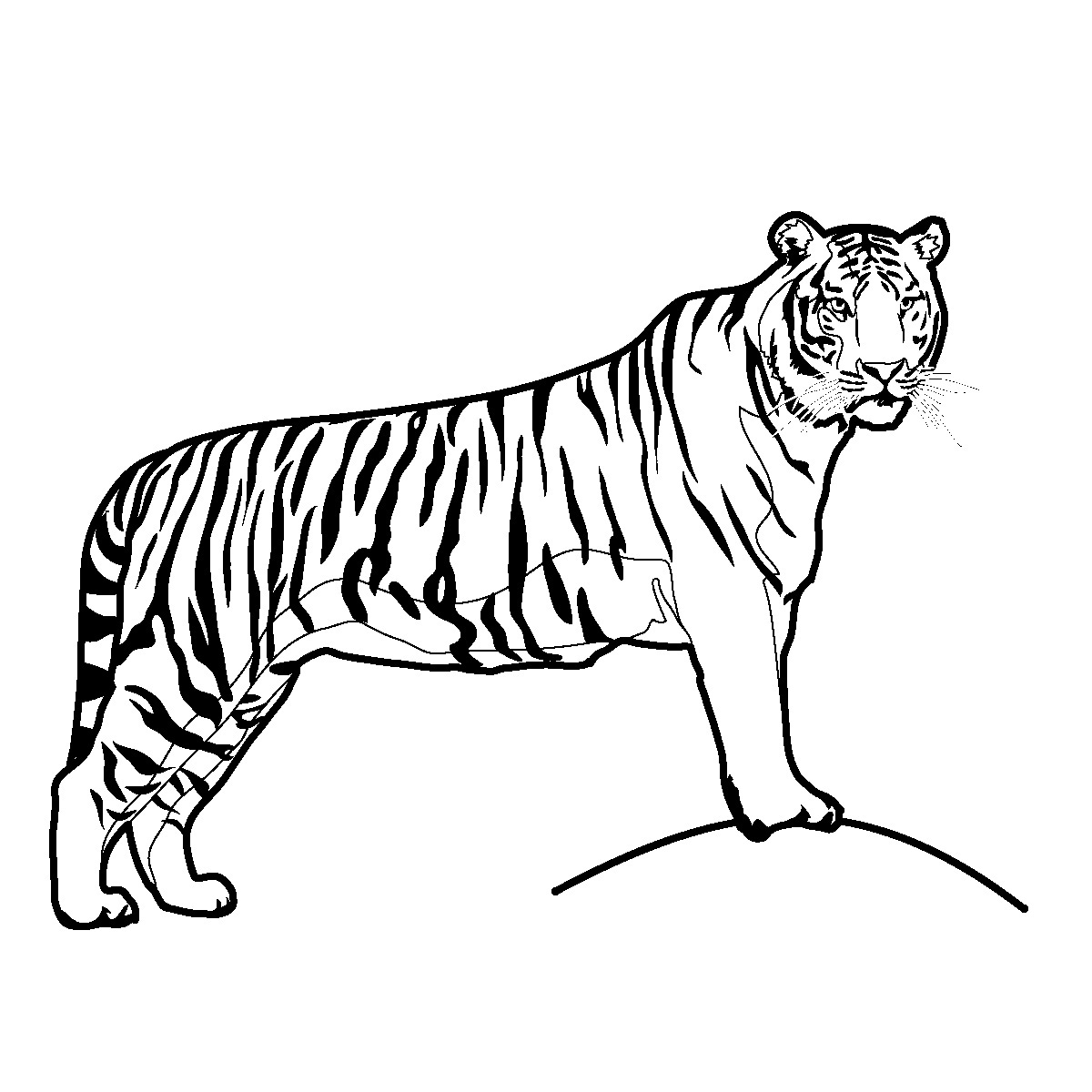 tiger images for colouring tiger coloring pages the sun flower pages colouring images tiger for