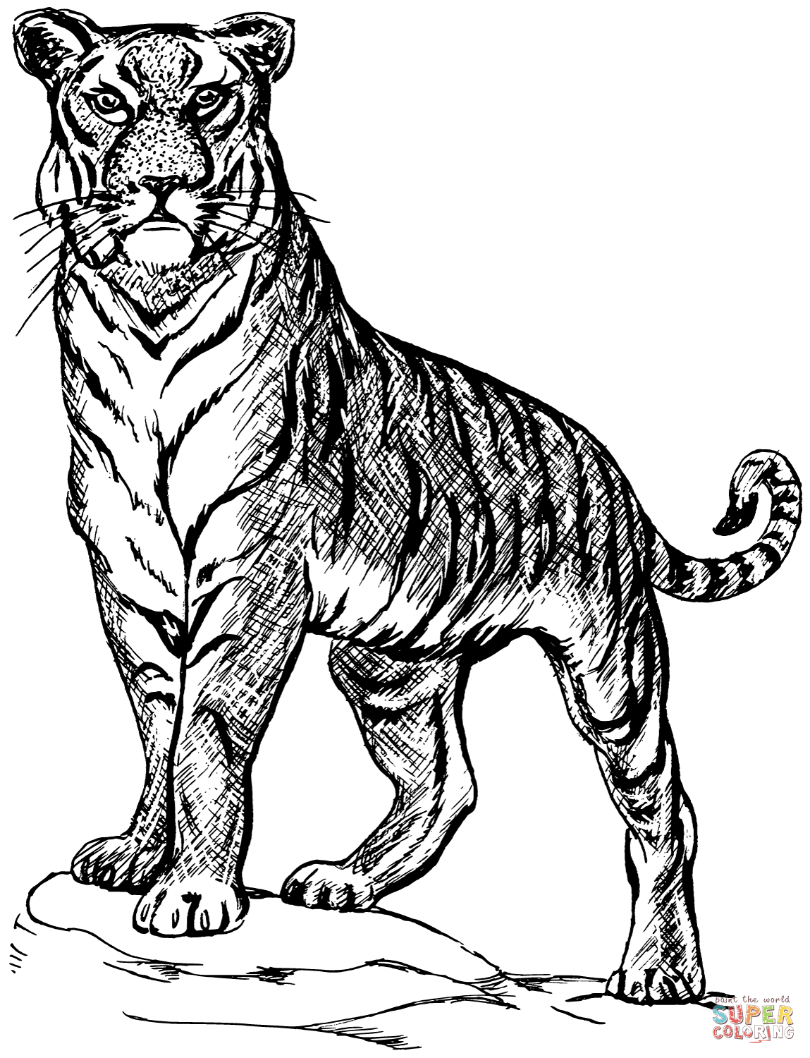 tiger pictures to colour the cutest baby tiger coloring page free printable colour pictures to tiger