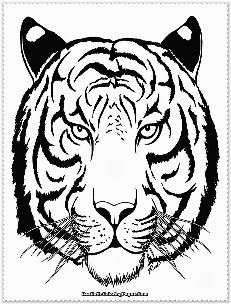 tiger pictures to colour tiger coloring pages free coloring home colour pictures to tiger